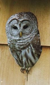 http://owls.narod.ru/pic-sb/035.jpg