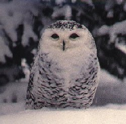 http://owls.narod.ru/pic-sb/046.jpg