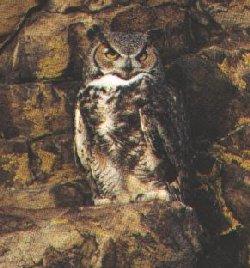 http://owls.narod.ru/pic-sb/052.jpg