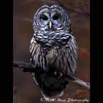 http://owls.narod.ru/pic-sm/owl024.jpg